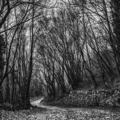 A path in the dark (Italian Film Photography) Tags: 6x6 autocord bw delta400 ilford analogica biancoenero film minolta pellicola blackwhite analogue trees wood bosco road sentiero rocks leaves dark scuro rami alberi hc110