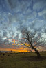 Reaching for the Clouds (thefisch1) Tags: sunset sky cloud intense colorful horizon mottled tree branch pasture trunk limb kansas