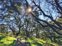 A trail at Crane Creek in Sonoma County (harminder dhesi photography) Tags: norcal northbay vscocam vsco snapseed bayarea sonoma sonomacounty california sun trees trail path view nature fall outdoors hiking landscape