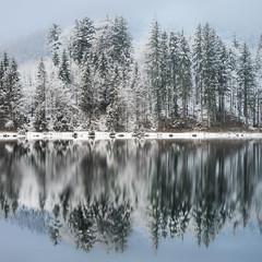 distilled.two (pinkmonty) Tags: tree treeline trees lake winter reflection longexposure water snow ice
