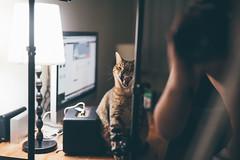 (Wen Cheng Liu (Busy)) Tags: 鏡 貓 cat