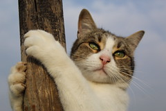 The Climb (slow_brains) Tags: cat kitty animal gatto climb winter sky playing play game puppy eyes love italy italia animali animale natura nature portrait look pretty pet pets cats