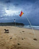 In the wind (caralan393) Tags: poodle flag beach sky clouds storm red