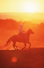 Cowboy, Quarter Horse , Equus przewalskii f. caballus, domestic horse (lotharlenz) Tags: cowboy sonneuntergang sauber qh quarterhorse reiten westernreiten kalender poster caballo cavalo cheval equus häst hest hestur hobu horse konj paard pferd zirgs
