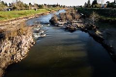 california dreaming: winter descends on the San Lorenzo (nocklebeast) Tags: nrd santacruz sanlorenzo river winter californiadreaming ca usa riverwalkl2070561 scphoto