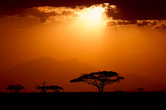 53 of 365 Explored (westindiangal) Tags: ambesoli allrightsreserved kenya sunset tree ©jeanchristopher mountain