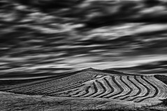 Patterns in the field (Daniel Schwabe) Tags: bw nature field landscape iceland patterns