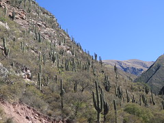 "cardon : cactus ! <a style=""margin-left:10px; font-size:0.8em;"" href=""http://www.flickr.com/photos/83080376@N03/18614814752/"" target=""_blank"">@flickr</a>"
