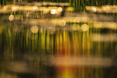 Misty Reflections (pogmomadra) Tags: sunlight abstract water misty reflections river reeds wednesday blurry nikon bokeh hbw happybokehwednesday d5300