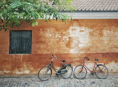 La espera (pimontes) Tags: bikes rbol naranja bicicletas copenhague pimontes
