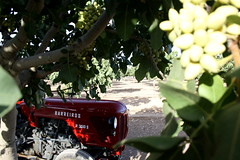 IMG_0379 (ACATCT) Tags: old españa tractor spain traktor agosto toledo antiguo massey pistacho tembleque barreiros 2015 bustards perdices liebres avutardas ff30ds r350s