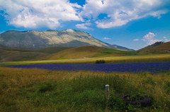 Purple field (alessio lagreca) Tags: sky italy mountain colour verde green field weather landscape photo amazing europa europe italia purple pentax picture campo paesaggio umbria pianura castelluccio campi agricoltura 2015 k50 agricolture 200faves 300faves 600faves 800faves