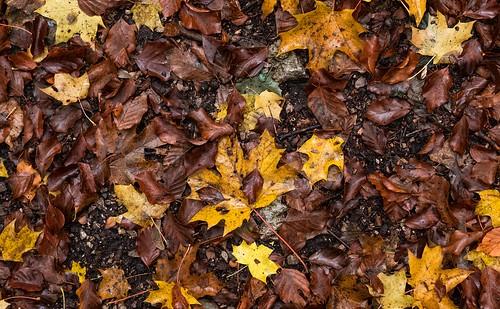 Blätter- Leaves