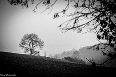20161231Brouillard-3 (loflol) Tags: coteaux brouillard brume ancien grain