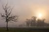 It's a New Year ! (jan buchholtz) Tags: janbuchholtz tree fog sunrise bayou houston texas sun mysterious dawn braysbayou