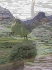 Highlands Birdie © Sally Bishop