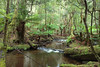 Tasmania (Gusulabu) Tags: australia tasmania wow landscape river creep green trees forest island canon beautiful
