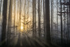 breakthrough (kderricotte) Tags: sonya6000 sunrays trees morning 35mm18 forest outdoor landscape moody