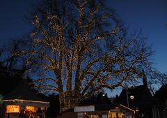 Christmas lights (Guglielmo Pedrini) Tags: christmas natale lights light noel luci merano addobbo albero