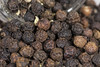 A pile of peppercorns -[ HMM ]- (Carbon Arc) Tags: macromondays redux2016myfavoritethemeoftheyear beginswiththeletterp pepper peppercorn pile jar tellichery thalassery spice seasoning sneeze wrinkled corn drupe seed black brown