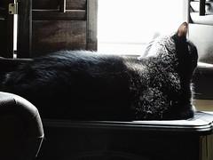 The Winter Sun Spot (Lana Pahl / Country Star Images) Tags: friendsofgracieandmillie catsandwindows tuxedocats theartofwindows windowwednesdays windowwednesday