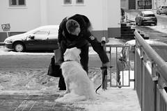 Reykjavik (Agentur snapshot-photography) Tags: animals bevölkerung blackwhite bw dog effekt hund hunde iceland island man manhund mann männer men personen reykjavik schwarzweiss sw tiere tierwelt alltag lebenswelten streetphotography isl
