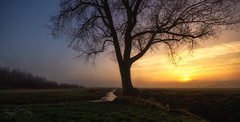 I'am... (Fragile Decay) Tags: tree morning sunrise fog netherlands colours nature fragiledecay water