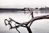 Tramonto sul lago di Bracciano (Japo García) Tags: lago agua árbol caído reflejo canoa piragua pueblo anguilara pace serenidad paz foto tramoto