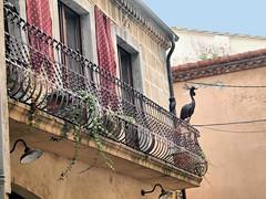 Besalu Balcony 217 (saxonfenken) Tags: 1031s 1031 spain besalu urbannature balcony railings challengeyouwinner