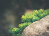 (N.H. || Photography) Tags: olympus omd em10 m zuiko 60mm f28 makro macro closeup nature green grass grün dof bokeh stone rocks brown sandy