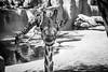 Funny Girraffe (WhiteShipDesign) Tags: isolated african single big zoo travel national safari nature wildlife animal africa long mammal wild wilderness portrait neck cute herbivore giraffe spots brown fun face funny head pattern closeup stand tall background camouflage horned headandneck standing horns girafe vertical vertebrate safarianimal