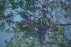 Quiero contemplarte sin contar el tiempo, Dibujarte con mis puros recuerdos... (chica lunar*) Tags: flores naturaleza abuelita morada amor cielo corazon lomography purple flowers tucolorfavorito toycamera