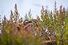 Mimétisme (1DSens33) Tags: teich oiseau oiseaux bird plume marais vol ailes sourde parc ornithologie ornithologue ornitho bec wildlife nature extérieur becassine