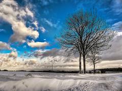 Winter landscape (GerWi) Tags: winter 2017 himmel sky blau schnee snow white snowdunes baum tree landscape outdoor pflanze