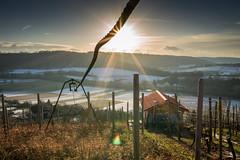 Sunset at the Grape Vine (matthias schroers) Tags: outdoor draussen sonne sun sunset dawn sky star grape vine wein weinberg haus enz sigma sony alpha 6000 19mm crop nature natur kalt winter cold weis orange blau