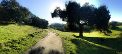 Sunny path (Jay758) Tags: california jay758 northerncalifornia sonomacounty taylormountain grass landscape park santarosa silhouette trail tree