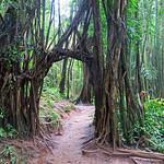 Oahu_Manoa Falls Trail thumbnail