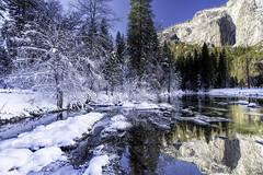 Merced River in Yosemite Valley (punahou77) Tags: yosemite yosemitenationalpark yosemitevalley landscape nature nikond500 nationalpark punahou77 pines park river reflection roadtrip sky stevejordan snow water wilderness winter elcapitan mountain mercedriver