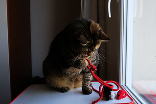 Alice and the red string