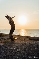 LEA_2531 (luke_amorelli) Tags: park blue sky beach clouds sunrise island nikon rocks state north fork d750 orient