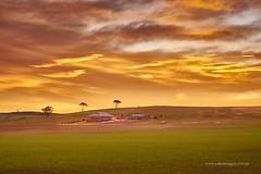 Rosedale sunrise (Valley Imagery) Tags: house green yellow sunrise farm south australia barossa rosedale