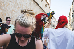 Polly wants a cracker (Dyniath) Tags: colors croatia parrot pirate polly scared dubrovnik