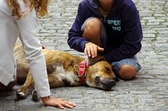 Kuschel mich ... (Knarfs1) Tags: street dog france frankreich strasse bretagne hund
