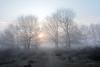 Sunrise in the Terhorsterzand. (Snoek2009) Tags: jacobspad terhorstruinen uithuizenhasselt camino trees sunrise terhorsterzand mist fog nevel heide nature ruby10 ruby20
