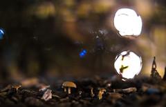 Mushroom @ 1.2 (::Lens a Lot::) Tags: mushroom 12 nippon kogaku japan nikkors 55mm f12 1969 | 7 blades iris nikon paris 2016 bokeh depth field color vintage manual classic japanese fixed length prime lens night light profondeur de champ