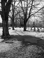 _2040400-BW (Boneil Photography) Tags: boneilphotography brendanoneil m43 microfourthirds panasonic dmcgx7 1442mmf3556ii haverhill ma cemetery bw blackandwhite