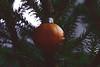 Christmas tree decor (allejandrine) Tags: mandarin orange christmas tree stillife spruce