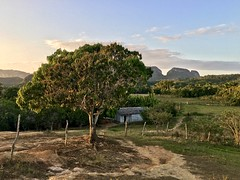 Viñales, Cuba (MJR96) Tags: viñales vinales cuba valley valle cuban rural farm farming town sunset tree green hill scenery tranquillo bonita sun hills trees nature holiday vacation getaway backpacking blue beauty beautiful