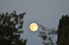 Full moon (dfromonteil) Tags: brillant full moon pleine lune arbres trees bokeh sky ciel white blanc nature