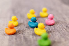 Five (or eight) little ducks (bbarekas) Tags: ducks little five eight blue yellow pink orange green carpet toys rubber 50mm dof macro macromondays inspiredbyasong song theme photo